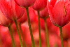 Stämme und Blumen Lizenzfreie Stockfotografie