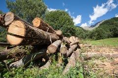 Stämme von Bäumen in den Bergen Stockfotos
