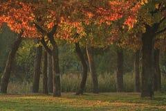 Stämme von Bäumen in den hellen Farben lizenzfreie stockfotografie