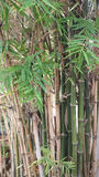 Stämme von Bambusanlagen lizenzfreies stockfoto