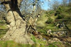 Stämme von großen Bäumen Stockfoto