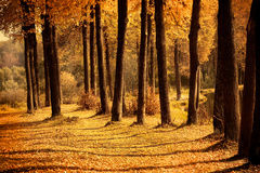 Stämme von Herbstbäumen Lizenzfreie Stockfotos