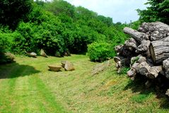Stämme von Pappeln und von Behältern auf den grünen Berici-Hügeln in der Provinz von Vicenza in Venetien (Italien) Lizenzfreies Stockfoto