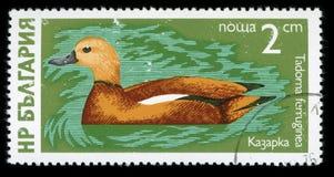 Stämpel för porto för serie för ` för Bulgarien`-vattenfågel, 1976 Royaltyfria Foton