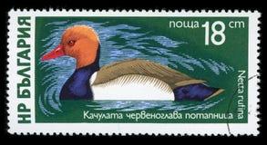 Stämpel för porto för serie för ` för Bulgarien`-vattenfågel, 1976 Royaltyfria Bilder