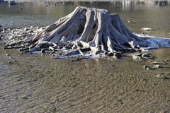 Stämpel i vatten Royaltyfri Foto