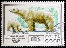 Stämpel som skrivs ut i USSR, shower en isbjörn, circa 1977 Fotografering för Bildbyråer