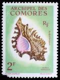 Stämpeln som skrivs ut av Comoros, visar en Murex Ramosus Royaltyfri Foto