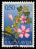 Stämpeln som skrivs ut i Jugoslavien, visar släktet Malva arkivfoton