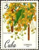Stämpeln som skrivs ut i Kuban, shower avbildar Cassiafisteln, circa 1967 arkivbild