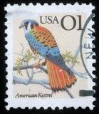 Stämpeln som skrivs ut i USA, visar den amerikanska tornfalken - den Falco sparveriusen Royaltyfri Fotografi