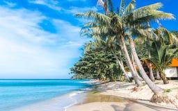 Ständiges Schwanken auf Palme auf karibischem Strand Lizenzfreies Stockfoto