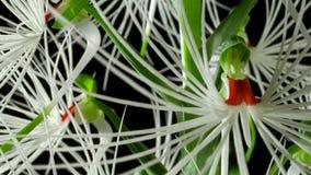 Stäng sig av orkidé har upp dess egen karakteristiska form och färg arkivbild