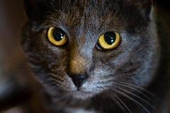 Stäng sig upp av ögonen av en katt royaltyfri fotografi
