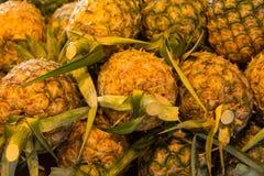 Stäng sig upp av ananas i marknad på Bangkok, Thailand Fotografering för Bildbyråer