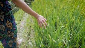 Stäng sig upp av assistenten av unga flickan som går i ängen och trycker på högväxt grönt gräs Kvinna som strosar till och med arkivfilmer