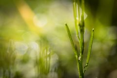 Stäng sig upp av att rensa i grön äng i suddig bakgrund i vår, abstrakt bakgrund Royaltyfria Bilder