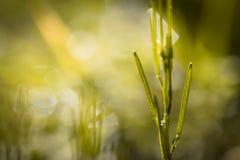 Stäng sig upp av att rensa i grön äng i suddig bakgrund i vår, abstrakt bakgrund Arkivbild