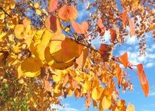 Stäng sig upp av Autumn Trees med ljusa orange och gula sidor royaltyfri bild