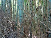 Stäng sig upp av bambustammar på den Arashiyama bambuskogen arkivfoto