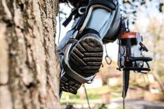 Stäng sig upp av benet av skogsarbetaren med en chainsaw som klättrar ett träd arkivfoton