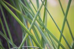 Stäng sig upp av blad för grönt gräs i sommar royaltyfri fotografi