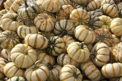Stäng sig upp av blandade kalebasser på Goebbert& x27; s-pumpalapp Fotografering för Bildbyråer