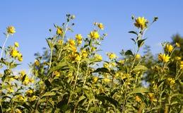 Stäng sig upp av blommor Royaltyfri Fotografi