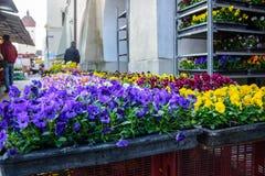 Stäng sig upp av blommor som är till salu i en marknad Royaltyfri Foto