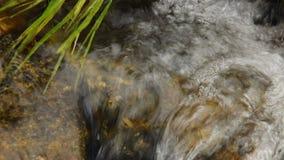 Stäng sig upp av den lilla vattenfallet och gröna växter i natur stock video