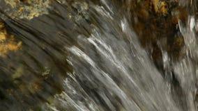 Stäng sig upp av den lilla vattenfallet och gröna växter i natur arkivfilmer