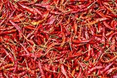 Stäng sig upp av dentorkade chili, matingrediens Arkivfoto