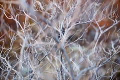 Stäng sig upp av det torra filialträdet, makrotextur av en grå torr buske royaltyfri foto