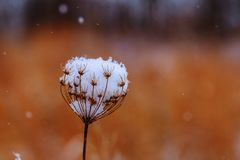 Stäng sig upp av det tunna lagret av stupad snö för vit som nytt absolut länge täcker av vintern Royaltyfri Foto