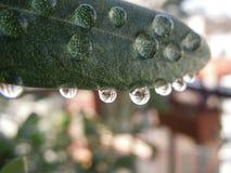 Stäng sig upp av droppar av vatten på ett blad arkivbild