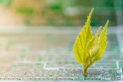 Stäng sig upp av elektroniska strömkretsar i teknologi på brädet för logik för Mainboard datorbakgrund, CPU-moderkortet, det huvu Arkivbild
