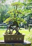 Stäng sig upp av en bonsaitree Arkivfoto