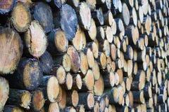 Stäng sig upp av en bunt av nytt avverkade trädstammar med grunt D royaltyfria bilder