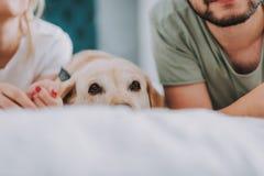 Stäng sig upp av en hund som ligger i säng i morgonen arkivbild