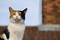 Stäng sig upp av en katt på taket Arkivfoto