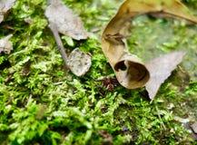Stäng sig upp av en liten spindel på skoggolvet Fotografering för Bildbyråer