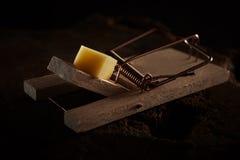 Stäng sig upp av en musfälla som agnas med ost fotografering för bildbyråer
