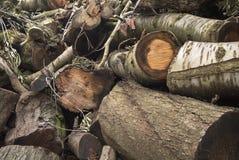 Stäng sig upp av en ny klippt träbunt som väntar för att brännas royaltyfria foton