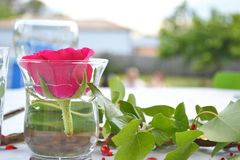 Stäng sig upp av en röd ros som svävar i en kopp royaltyfria bilder