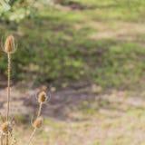 Stäng sig upp av en torr växt med bruna fläckar på en solig dag arkivbilder