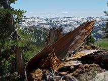 Stäng sig upp av en trädstubbe i bergen Arkivfoton