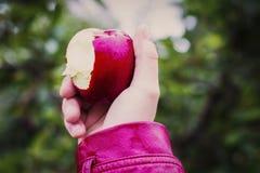 Stäng sig upp av ett bitit äpple som rymms arkivbild