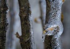 Stäng sig upp av ett djupfryst brutet exponeringsglas som trädfilial med ett gult blad arkivbilder