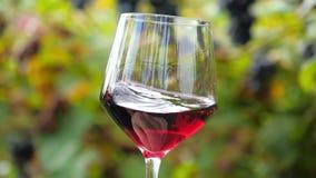 Stäng sig upp av ett exponeringsglas av rött vin stock video