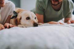 Stäng sig upp av ett gladlynt ungt par som vilar med deras hund arkivbild